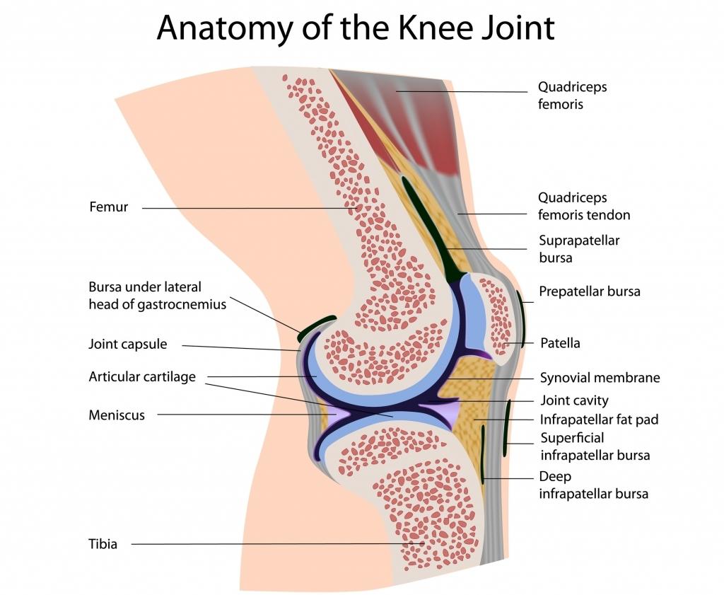 netball injuries knee